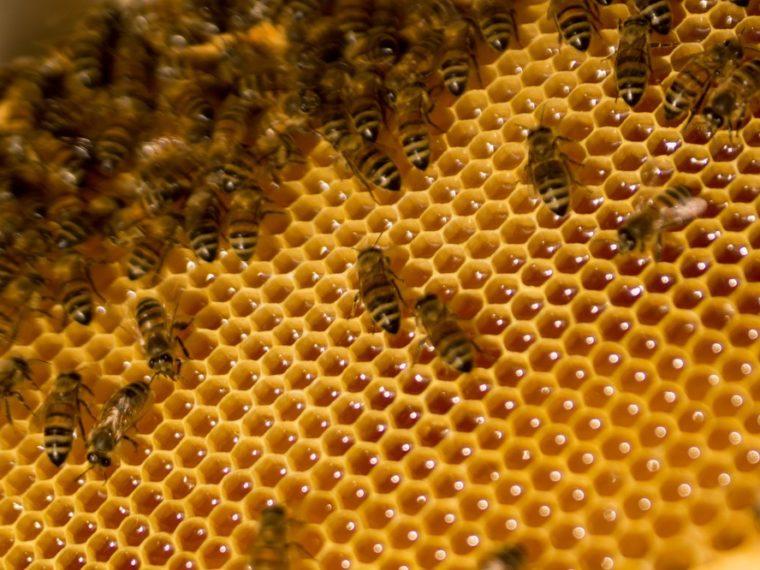 Quel mois récolte-t-on le miel d'été?