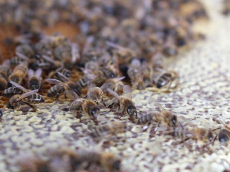 Le miel et les abeilles en chiffres